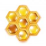 Honeycomb isolated on white — Stock Photo
