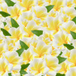 Frangipani background — Stock Photo