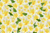 Frangipani background — 图库照片