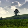 Green field and tree — Stock Photo #10740284