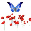 The butterfly and the poppies — Stock Photo