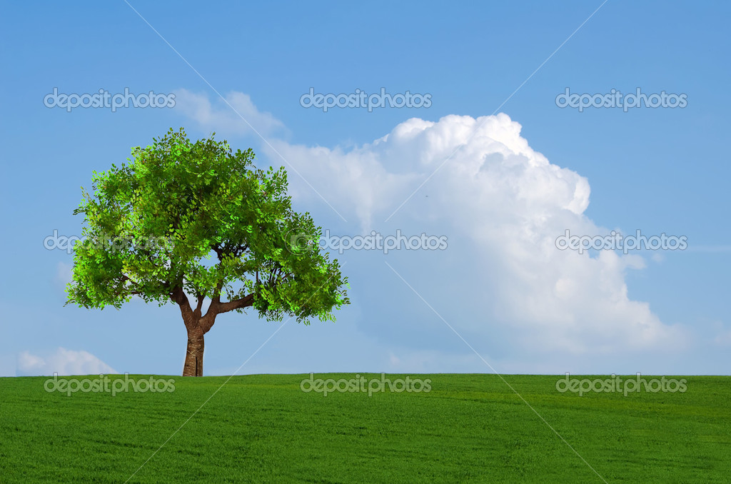 Field, tree and blue sky with clouds  Stock Photo #10740380