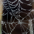 Stock Photo: Dew and spider web