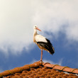 The stork — Stock Photo