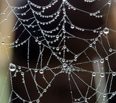 Dew and spider web — Stock Photo