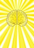 Bright Brain — Stock Vector