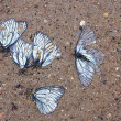 Stock Photo: Grave of butterflies
