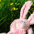 Relaxed cuddly rabbit — Stock Photo