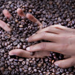 Stock Photo: Hands of young womand coffee beans