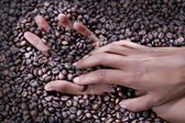Hands of a young woman and coffee beans — Stock Photo