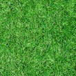 Beautiful green grass texture from stadium - Stock Photo