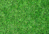 Beautiful green grass texture from stadium — Stock Photo