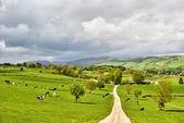 Pitoresco inglês dairy farm — Fotografia Stock