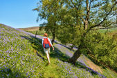 Hiker walking through bluebells — Stock Photo