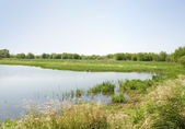 Spring river flood plain — Stock Photo