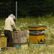 Stock Photo: Beekeeper, bee, beehive