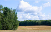 Field, landscape, clump of trees and forest — Stock Photo