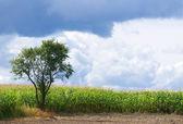 Samotne drzewo — Zdjęcie stockowe