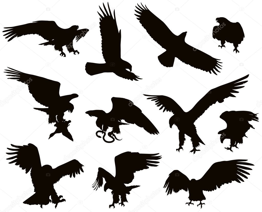 Hunting eagle detailed vector Eagle Silhouette Vector