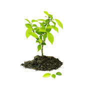 Seedling green plant on a white background — Stock Photo