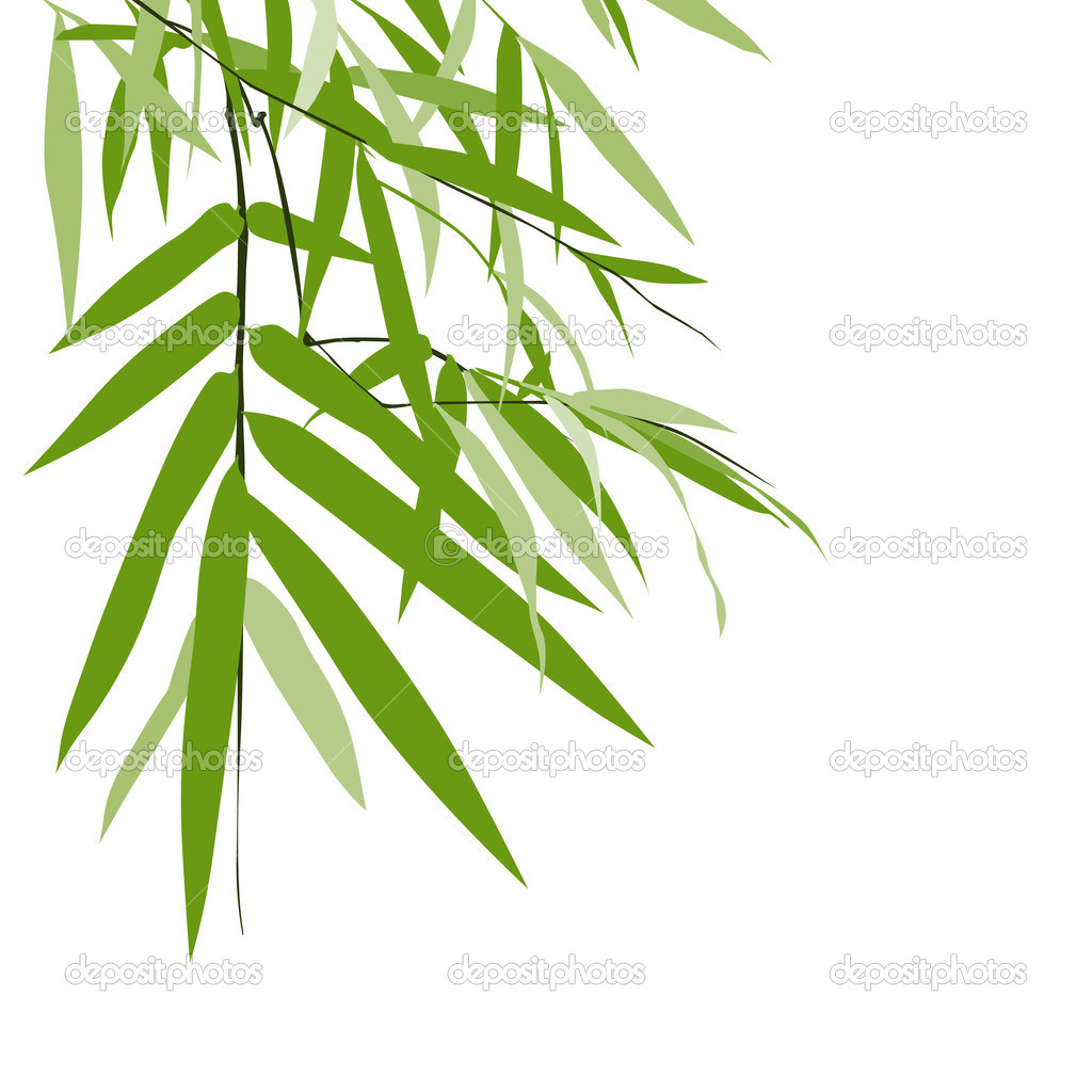 Bamboo isolated greeting card, vector illustration — Stock Vector #11873923