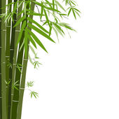 Bamboo,vector illustration — Stock Vector