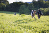 Group of tourists walking on a footpath across the field — Stock Photo