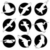 Set of brand collection of logos with birds — Stock Vector