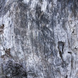 Texture of wood, old wood and cracked — Stock Photo