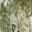 Old wood texture decorative green — Stock Photo