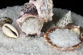 Sea Salt with shells close-up — Stock Photo