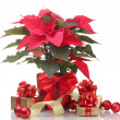 Beautiful poinsettia in flowerpot, New Year's balls and gifts isolated on white — Stock Photo