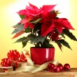 Beautiful poinsettia in flowerpot, gifts and Christmas balls on wooden table on yellow background — Stock Photo