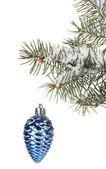 Cono de navidad en el árbol sobre fondo blanco — Foto de Stock
