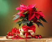 Beautiful poinsettia in flowerpot, gifts and Christmas balls on wooden table on bright background — Stock Photo