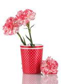 Piękny róż w czerwony kubek na białym tle — Zdjęcie stockowe