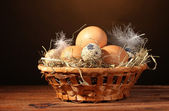Chicken and quail eggs in a nest on wooden table on brown background — Stock Photo