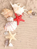 Seashells and starfish on sand — Stock Photo