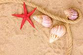 Seashells and starfish with rope on sand — Stock Photo