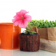Watering can, flower and plants in flowerpots isolated on white — Stock Photo #10814428