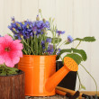 Watering can, tools and flowers on wooden background — Stockfoto