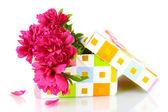 Beautirul rosa peônias em caixa de presente, isolado no branco — Foto Stock