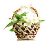 Lindas flores de jasmim com folhas no cesto, isoladas no branco — Foto Stock