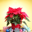 Beautiful poinsettia with christmas balls and presents on wooden table on yellow background — Stock Photo