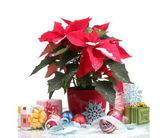 Hermosa flor de pascua con bolas de navidad y regalos, aislados en blanco — Foto de Stock