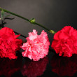 Stock Photo: Bouquet of carnations on black