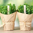 Thyme herb plants in pots with beautiful paper decor on wooden table on green background — Stock Photo #10897113