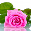 Beautiful pink rose isolated on white — Stock Photo #10899002
