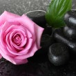Spa stones with drops, pink rose and green leaves on grey background — Stock Photo