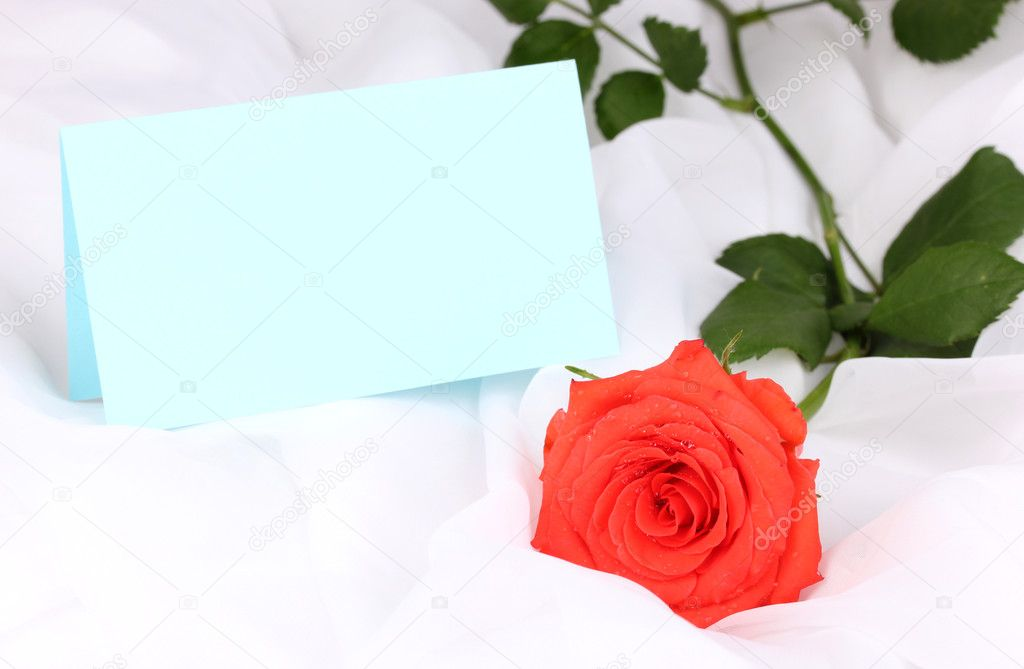 Beautiful rose on white cloth — Stock Photo #10922992